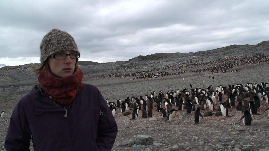 Jen describes birds on Avian Island, Jan. 2013